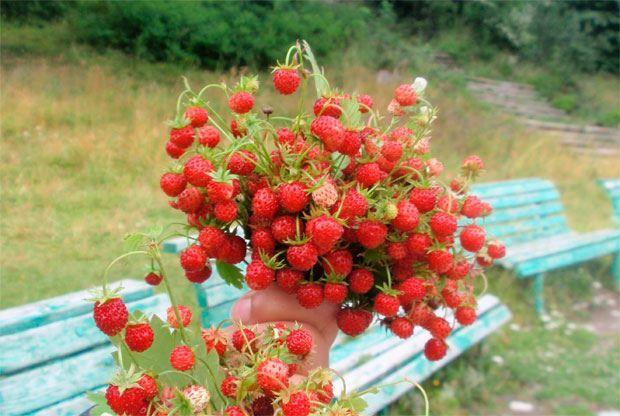 Какой праздник в России 9 июля?