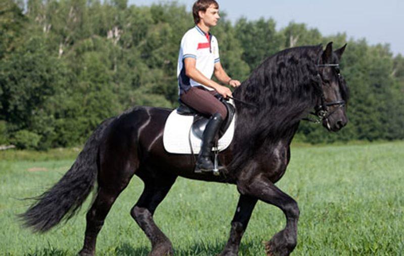 Оригинальный подарок другу - Езда на лошади