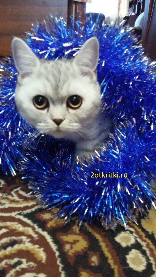 Всемирный день кошек - 8 августа