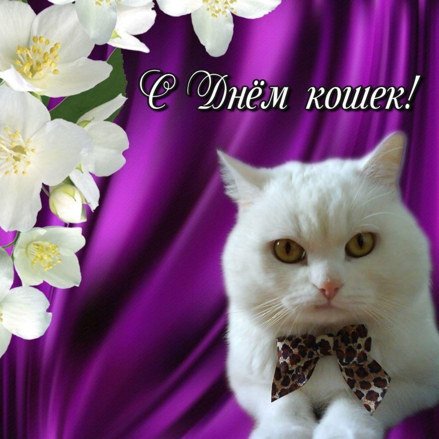 8 августа праздник - Всемирный день кошек
