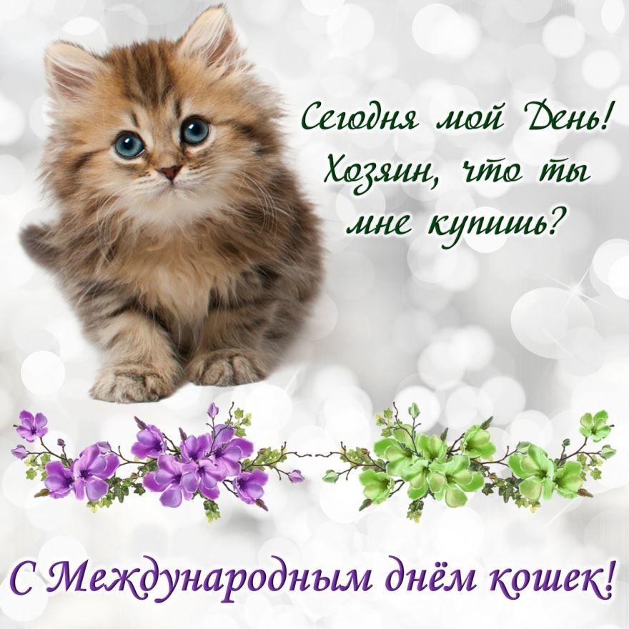 Всемирный день кошек - 8 августа, открытка прикольная