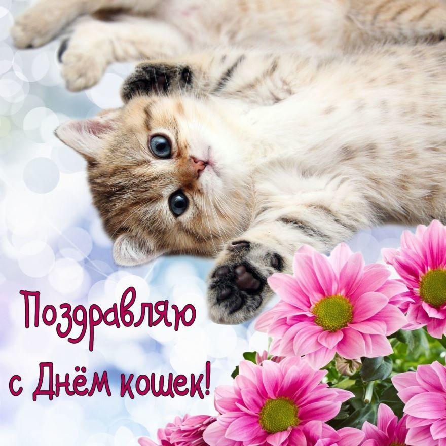 Всемирный день кошек какого числа?