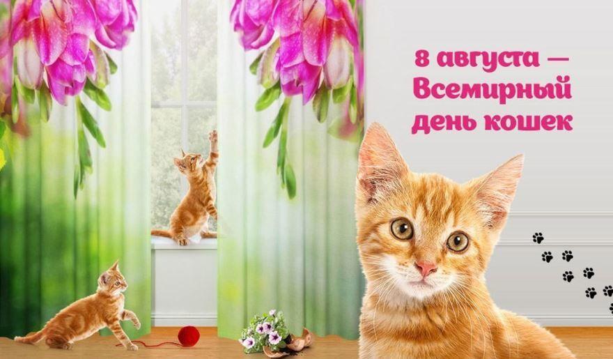 8 августа - Всемирный день кошек, картинка