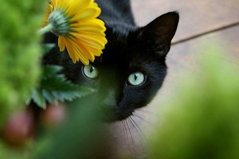 Всемирный день кошек какого числа - 8 августа