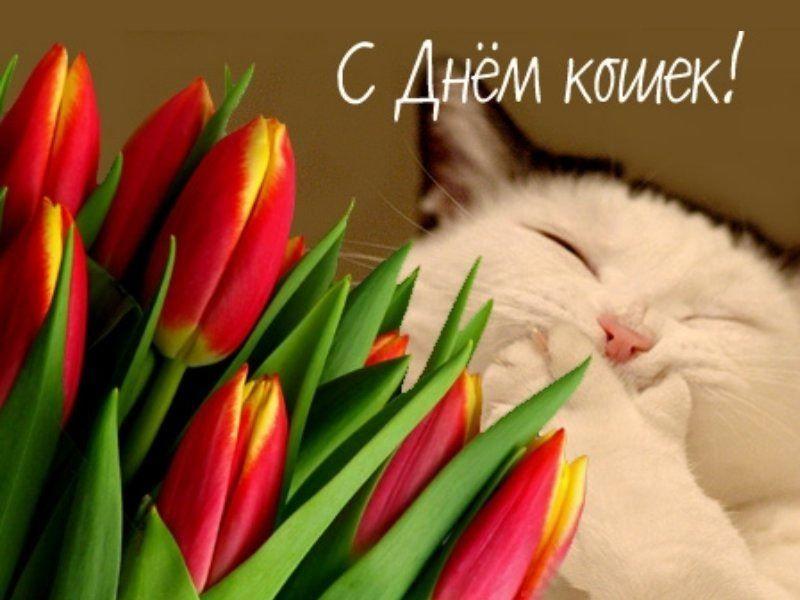 Прикольная картинка - Всемирный день кошек