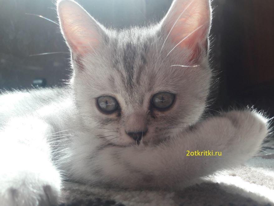 Красивое фото - Всемирный день кошек