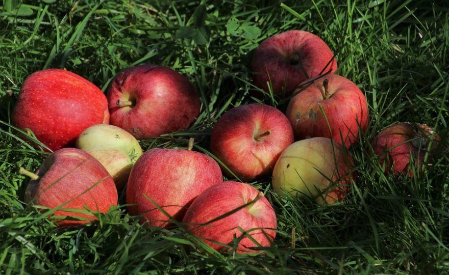 Яблочный спас картинки к празднику
