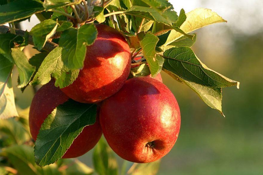 Яблочный спас в России - 19 августа