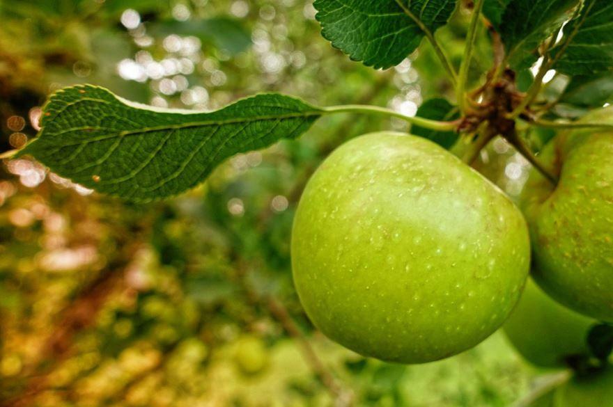 Яблочный спас, красивые картинки яблок