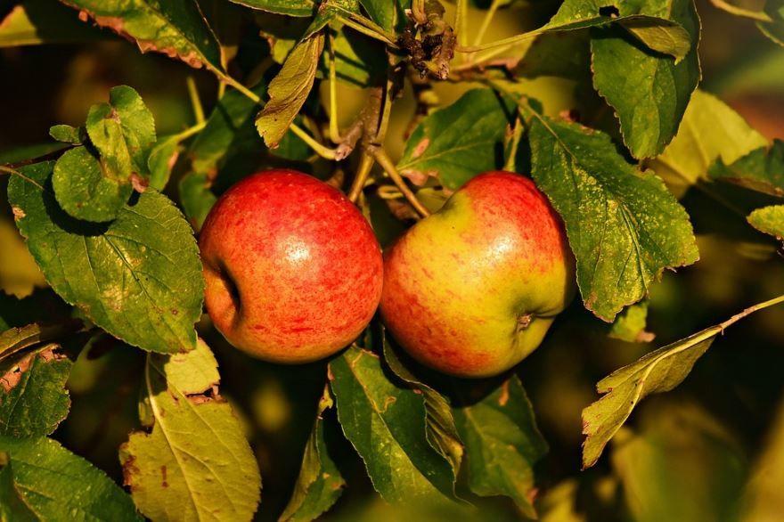 Яблочный спас 2020 год