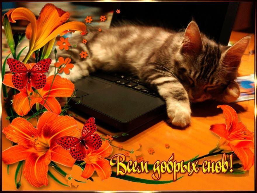 Доброй ночи, сладких снов красивая открытка