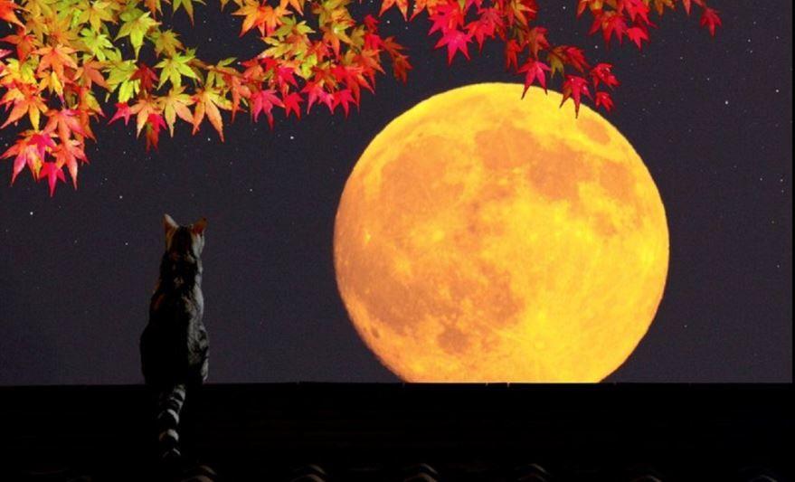 Добрый, осенний вечер картинка прикольная с котиком