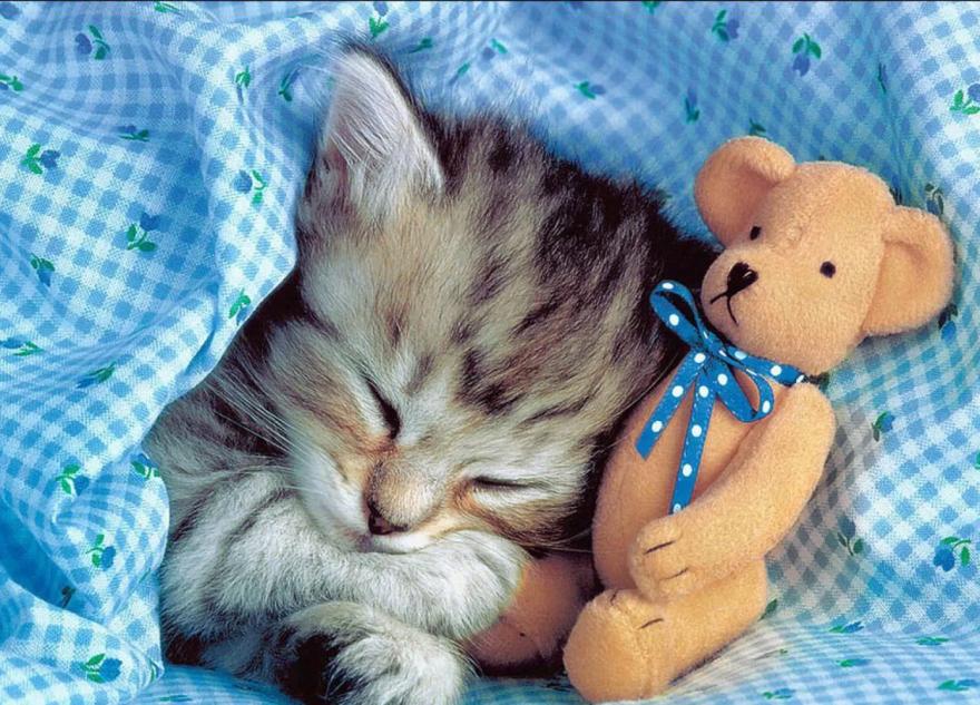 Прикольная картинка доброй ночи любимой девушке