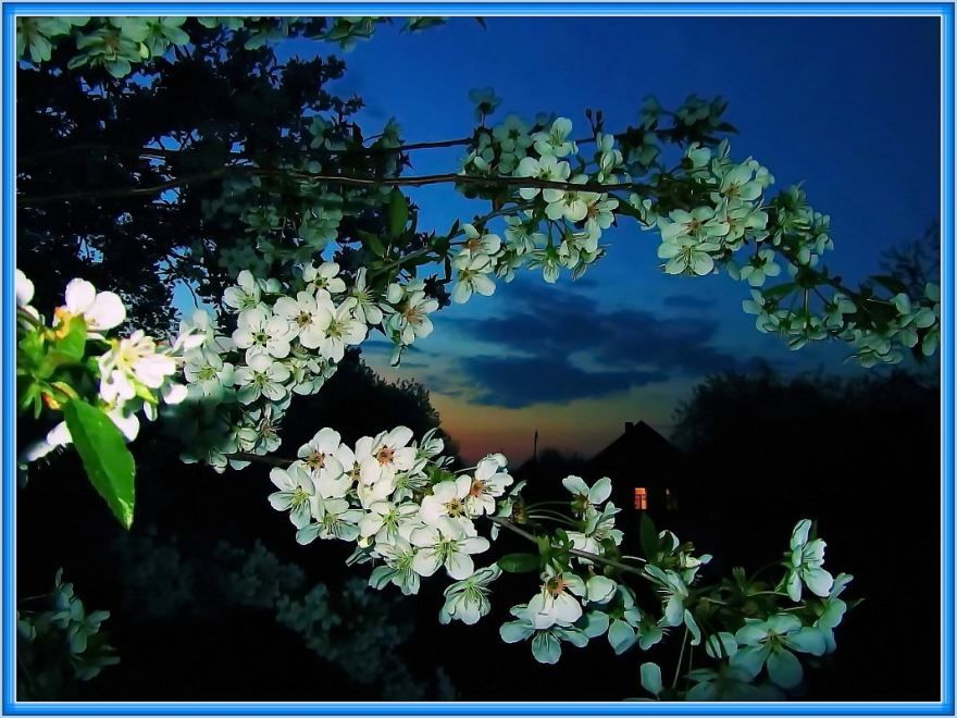 Доброго весеннего вечера, красивая картинка