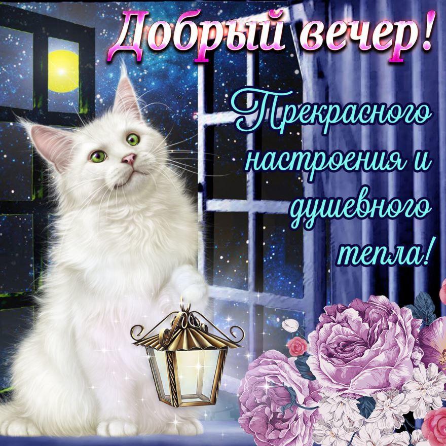 Добрый вечер женщине, открытка с пожеланиями
