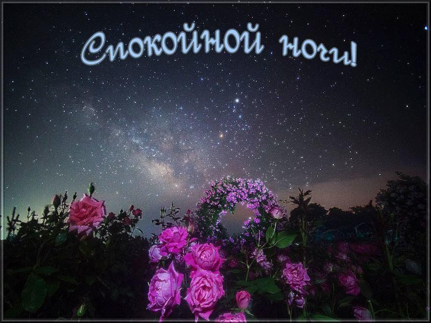 Доброй, летней ночи картинка бесплатно