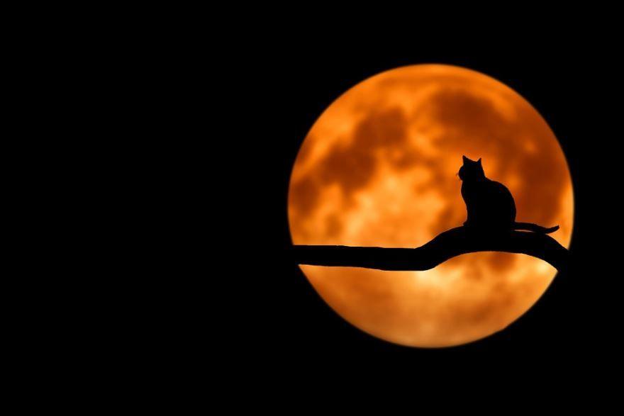 Необычное фото 'Доброй ночи'