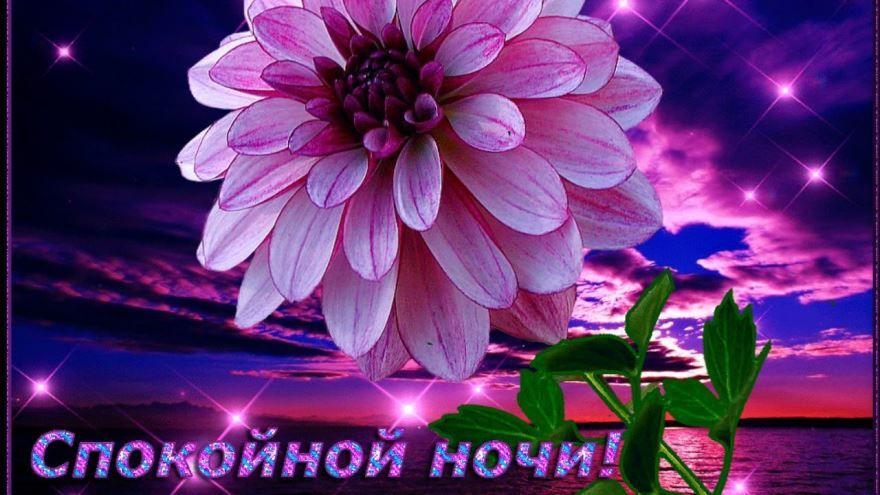 Открытка спокойной ночи, картинка 'Цветы'