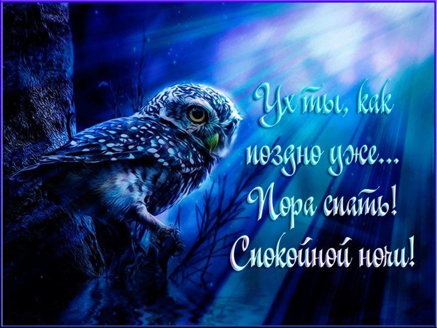 Прикольная открытка с пожеланием спокойной ночи