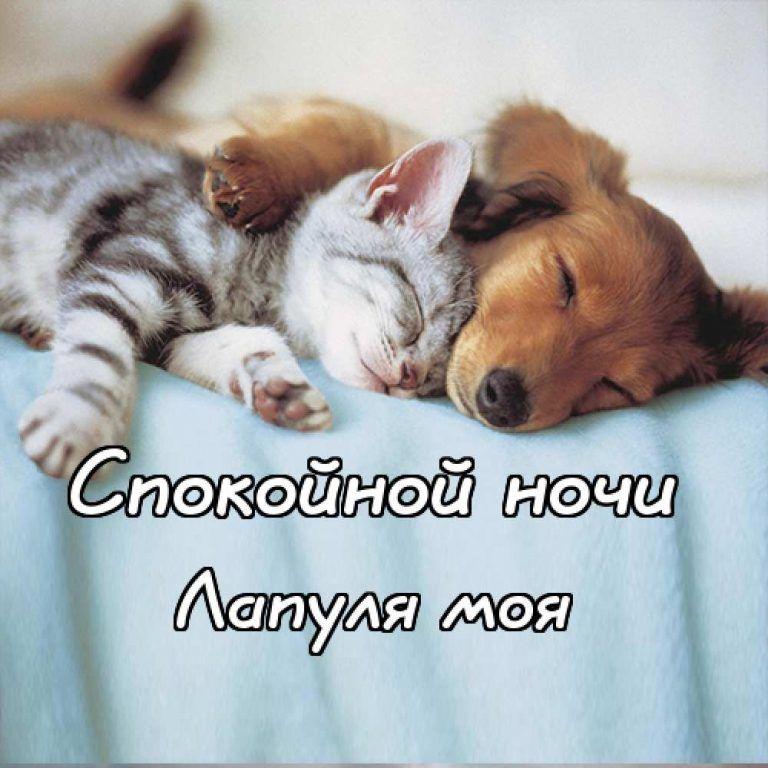 Спокойной ночи картинка с надписью, прикольная