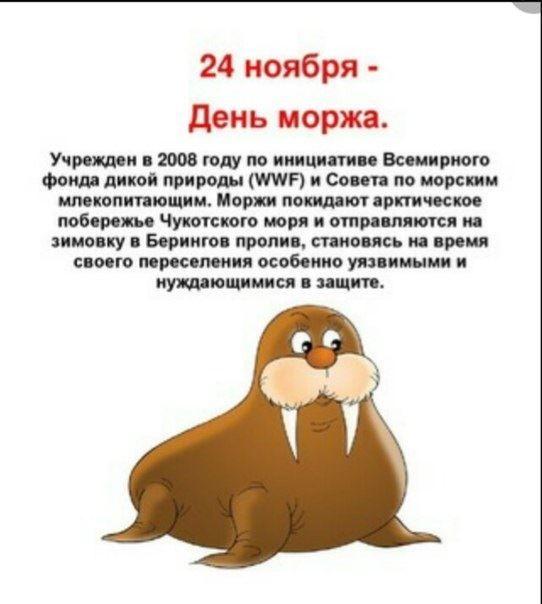 День моржа в России - 24 ноября