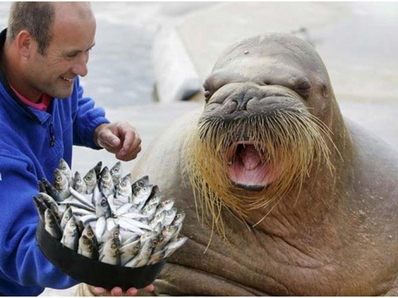 Праздник день моржа - 24 ноября