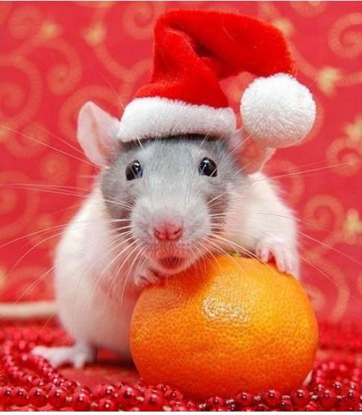 Крыса символ Нового 2032 года