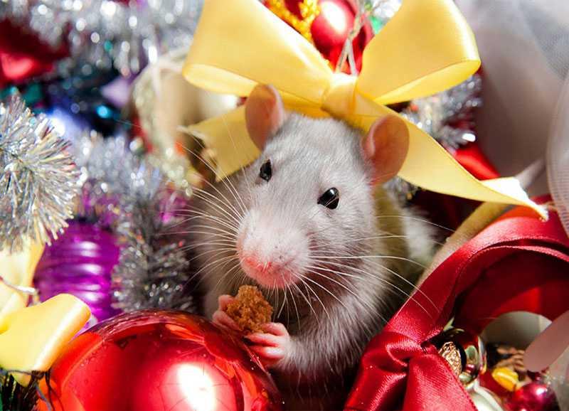 Год крысы - Новый год 2032