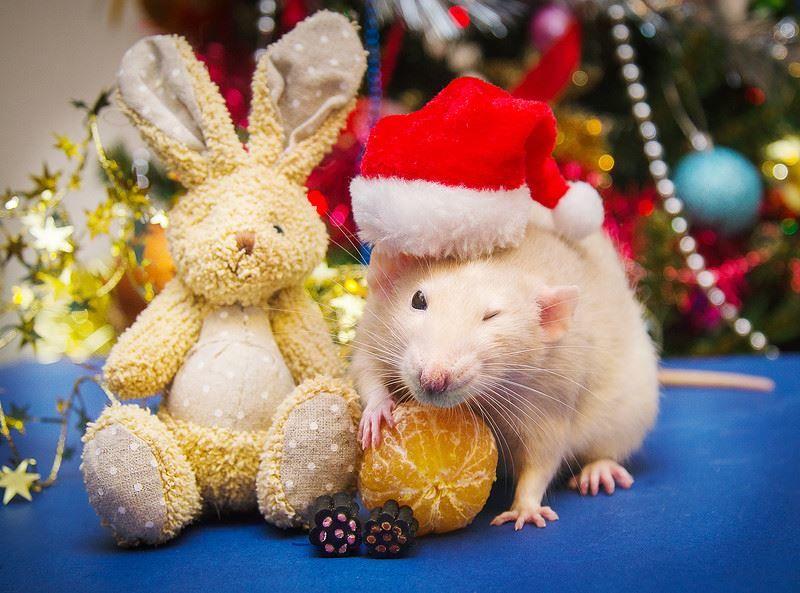 Новый год 2032 - год белой крысы