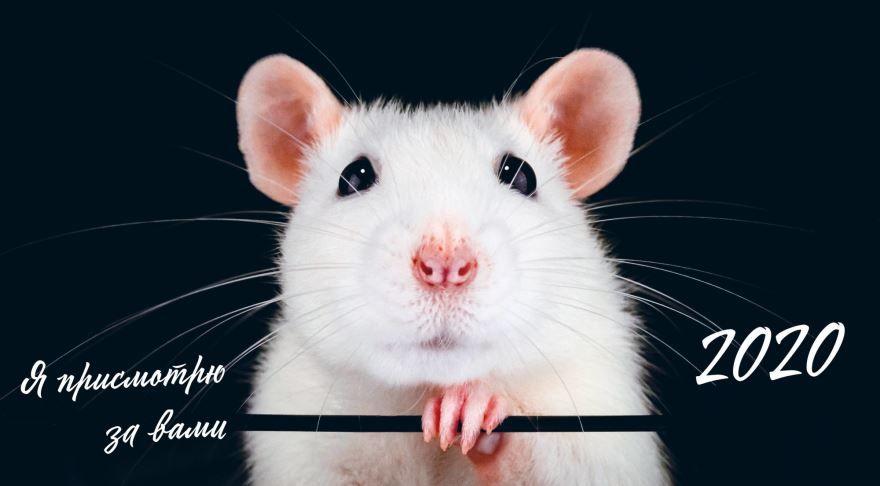 2032 год - год белой крысы по восточному гороскопу