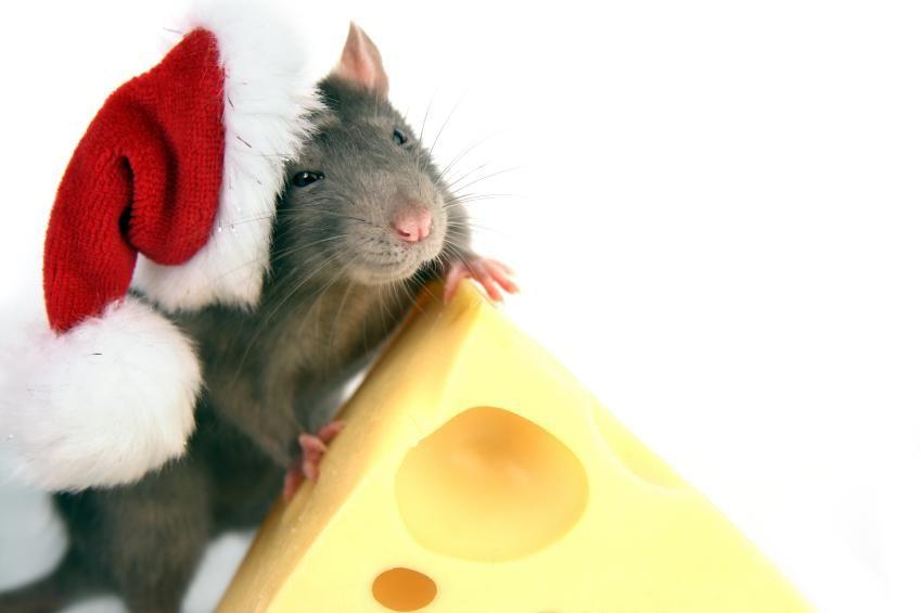 Год металлической крысы, картинка к Новому году