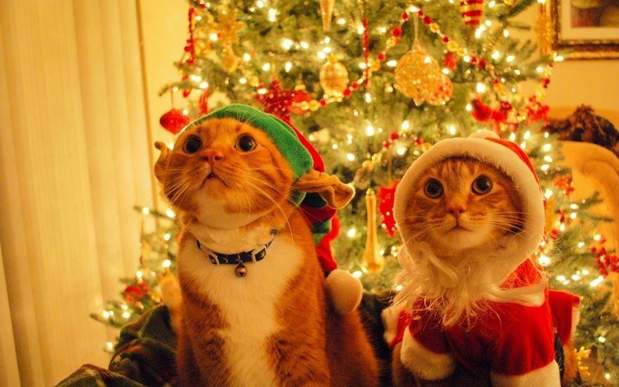 Новый год животные, прикольная картинка