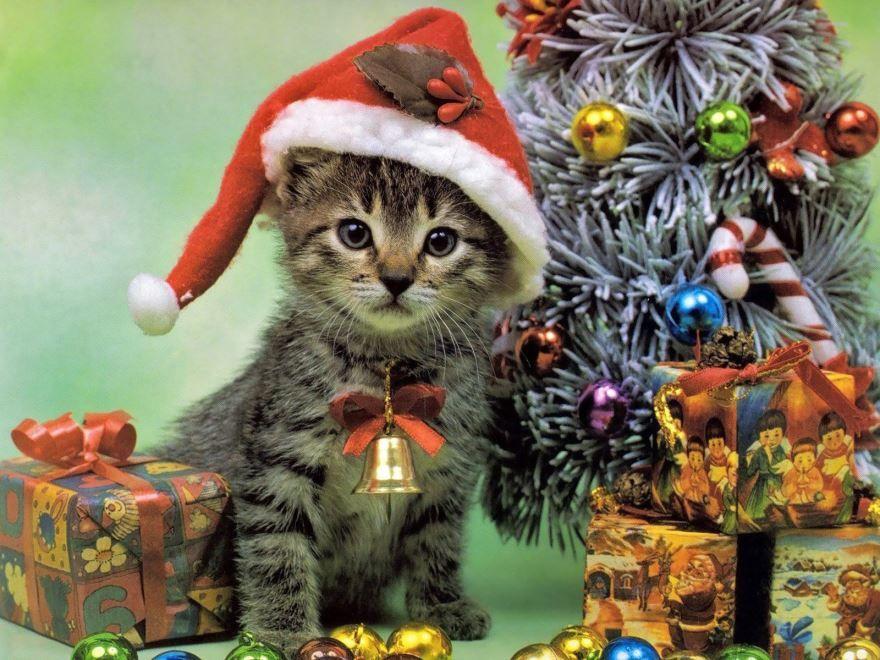 Картинка животные на Новый год