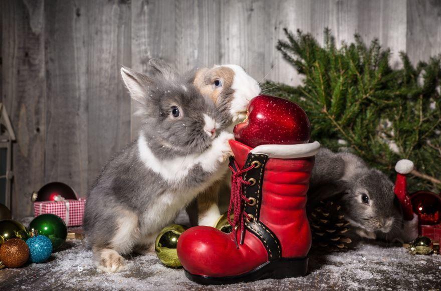 Необычные, прикольные картинки на Новый год с животными