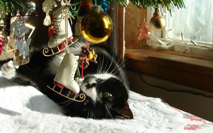 Прикольные фото животных в Новый год