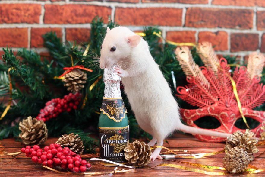 Животные встречают Новый год
