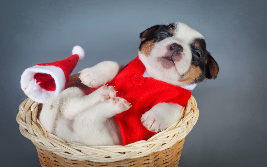 Смешные картинки животных на Новый год