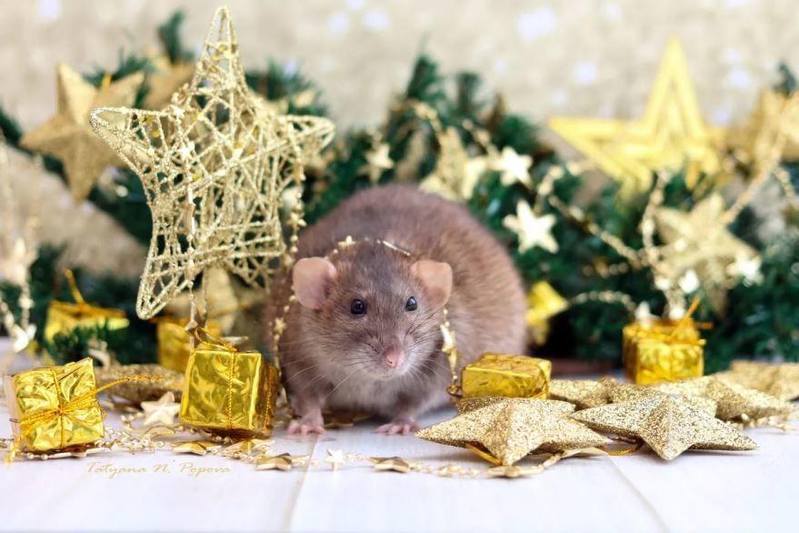Картинка животные встречают Новый год