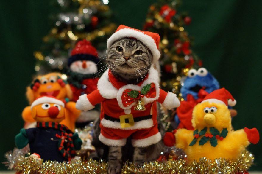 Смешные животные в Новый год