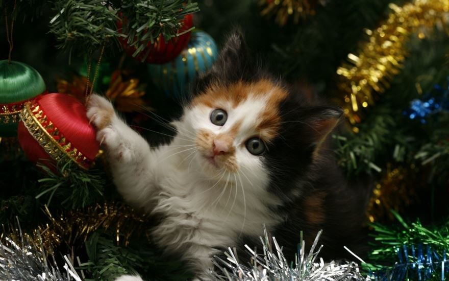 Прикольные картинки с кошками на Новый год