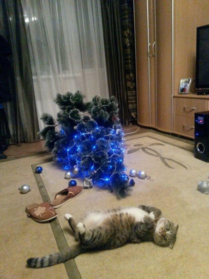 Приколы про кошек на Новый год
