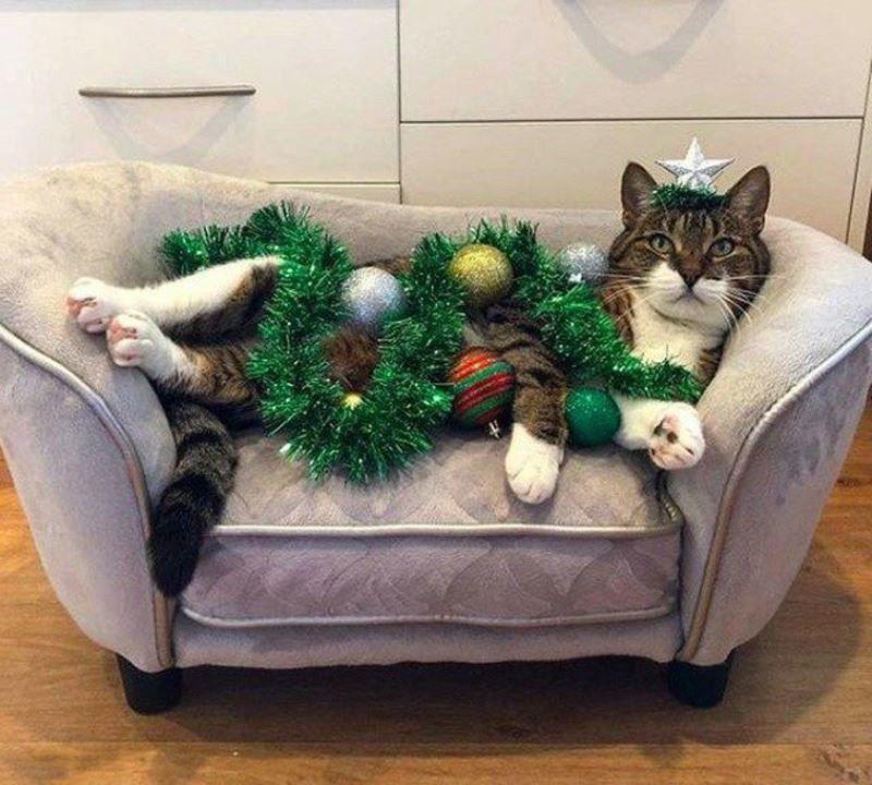 Как защитить елку от кошки?