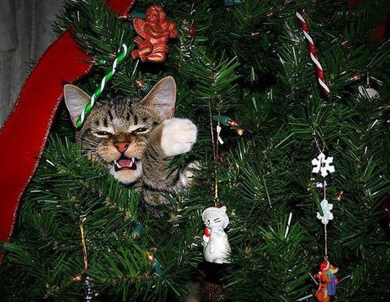 Прикольные фото с кошками и елками на Новый год