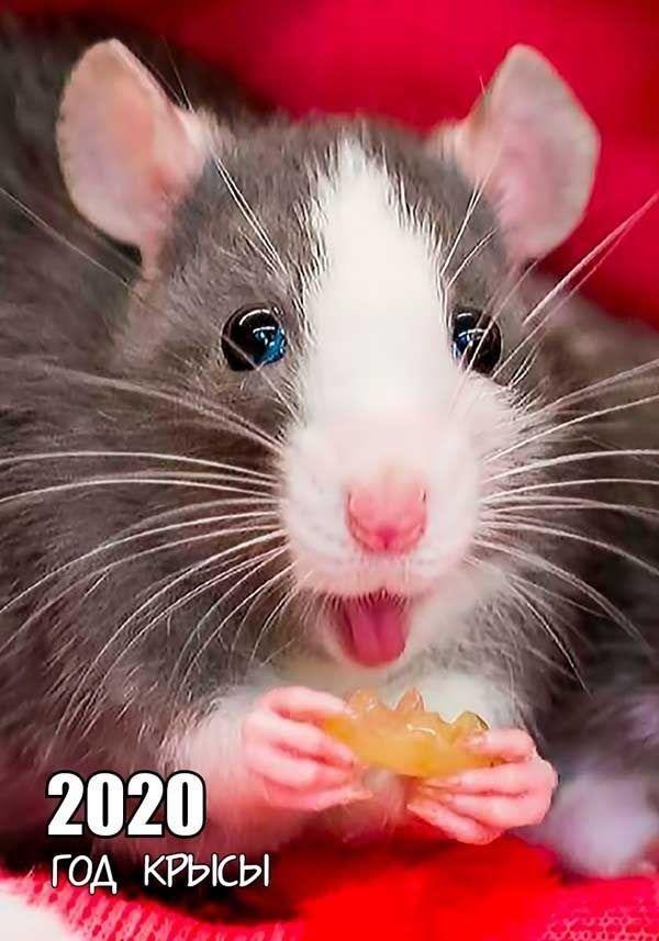 Красивая картинка на Новый год, крыса - символ года