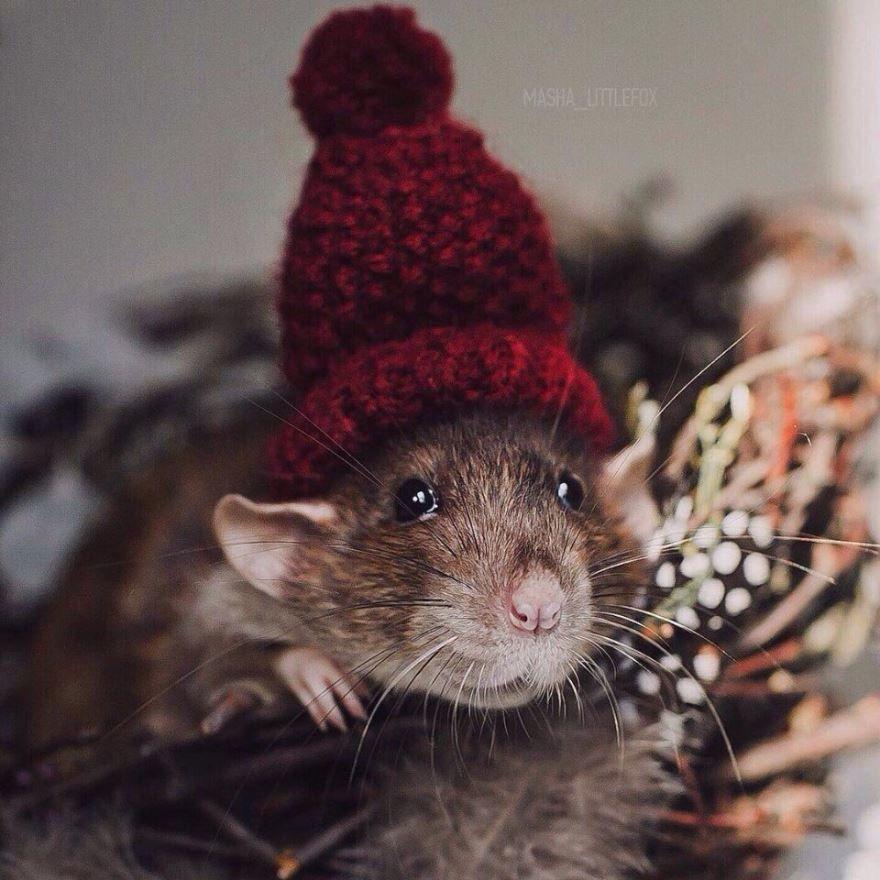 Мыши и крысы в Новый год