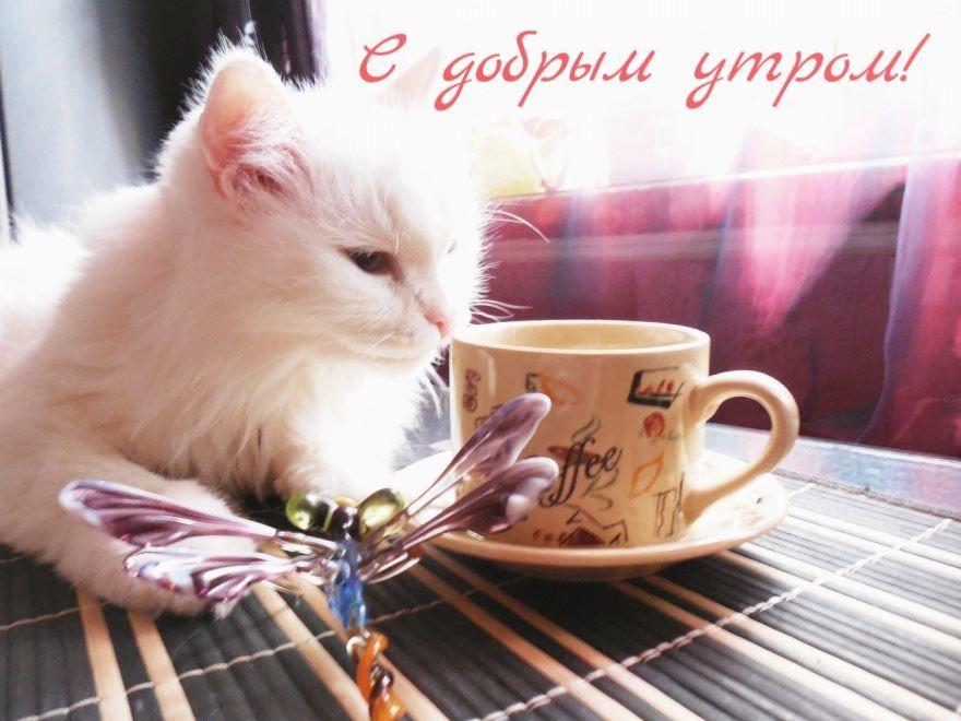 Прикольные картинки С Добрым утром и хорошего настроения