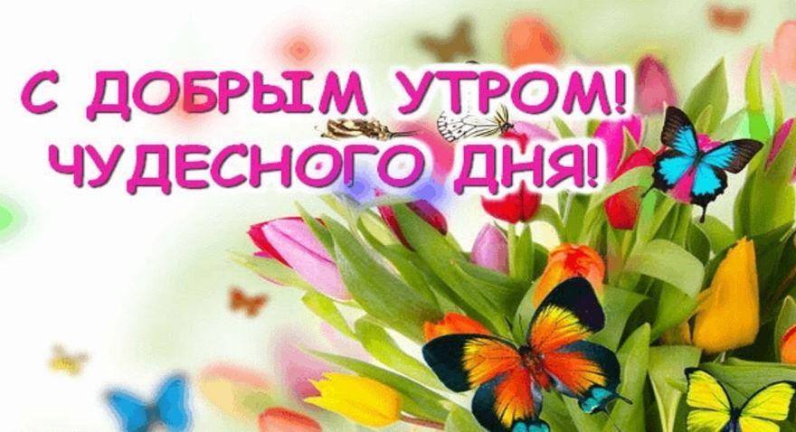 Пожелание доброго утра и хорошего дня картинки