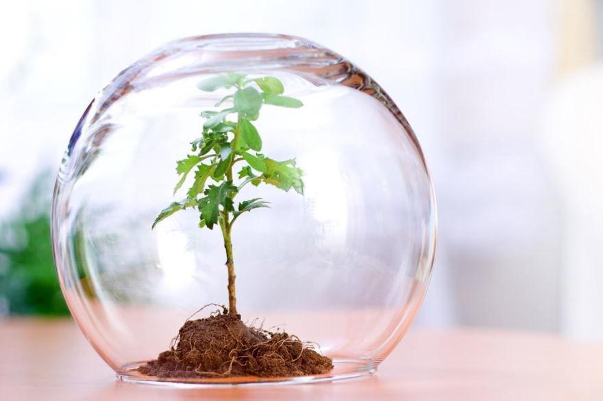 День эколога в 2020 году какого числа?