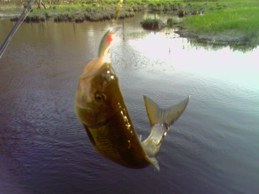 С днем рыбака, прикольная картинка