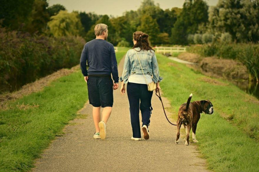 Летний день прогулка - Международный день прогулки, картинки